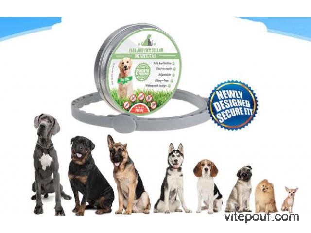 Collier anti-tiques et anti-puces pour chien et chat